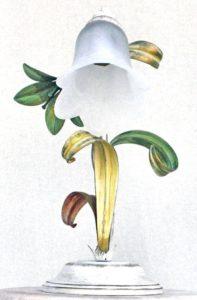 Blumenlampen